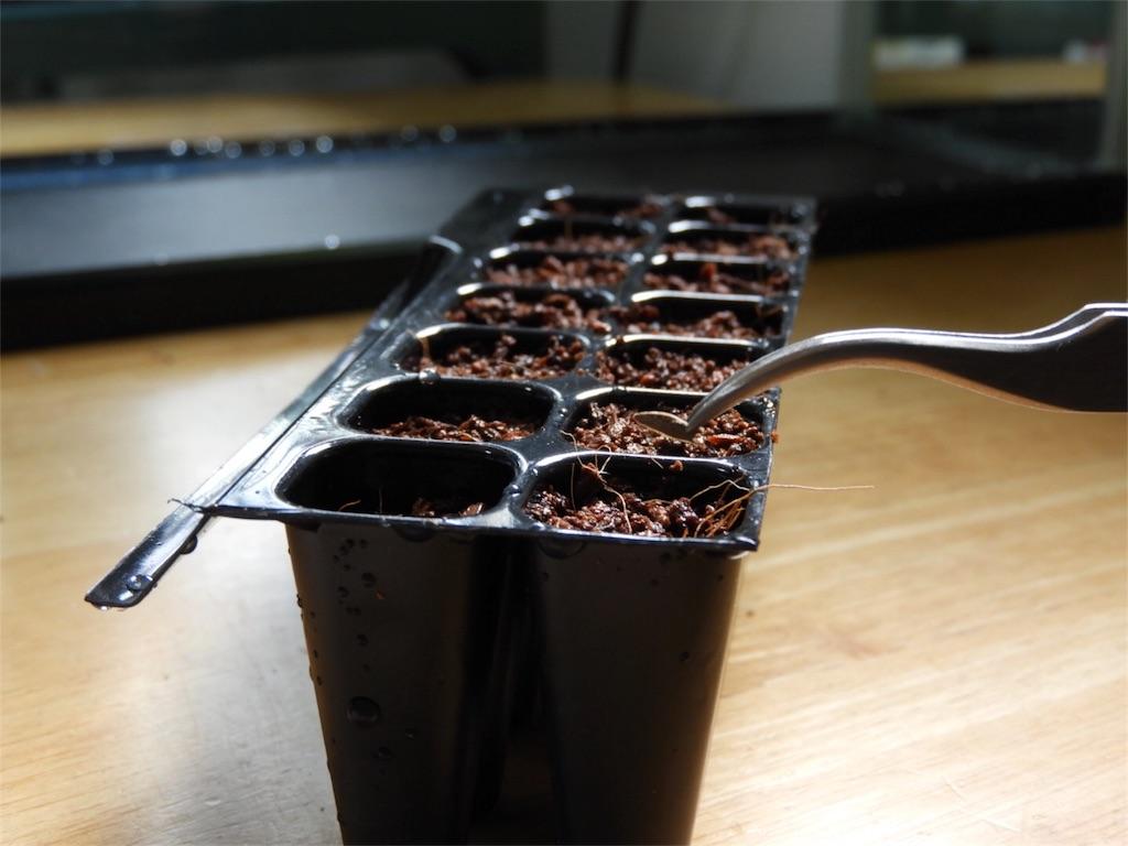 f:id:kamome-plants:20180422220553j:image