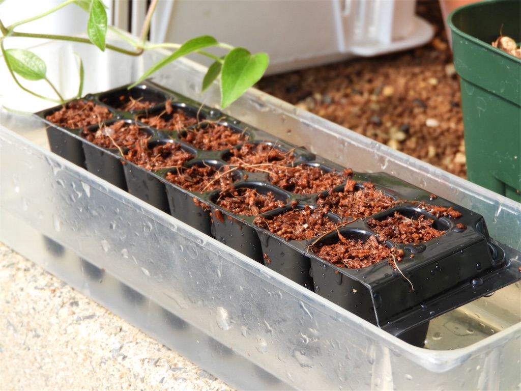 f:id:kamome-plants:20180422221348j:image
