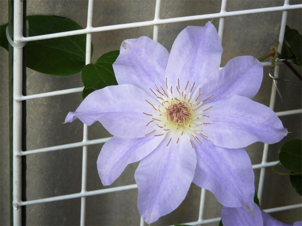 f:id:kamome-plants:20180512204250j:image