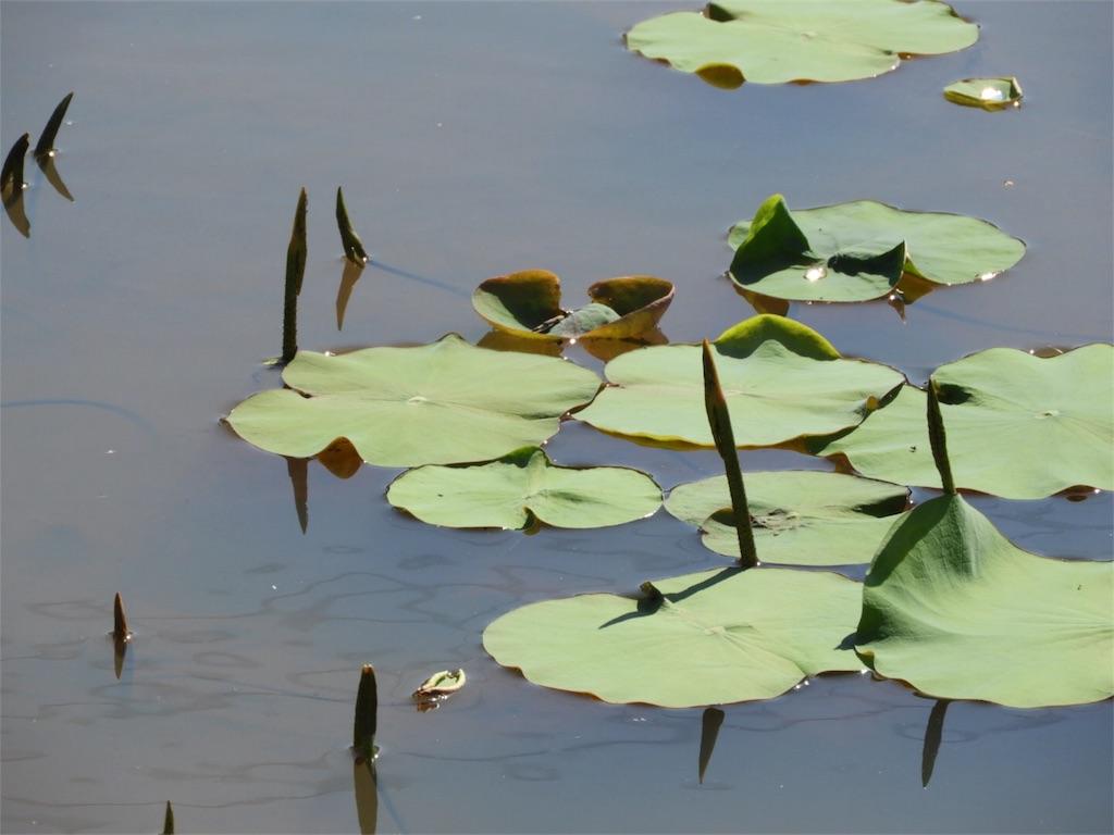 f:id:kamome-plants:20180520123838j:image