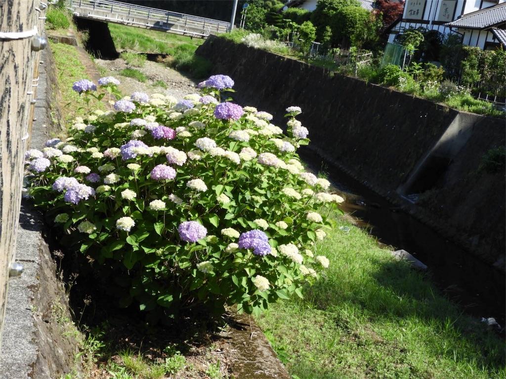 f:id:kamome-plants:20180520125625j:image