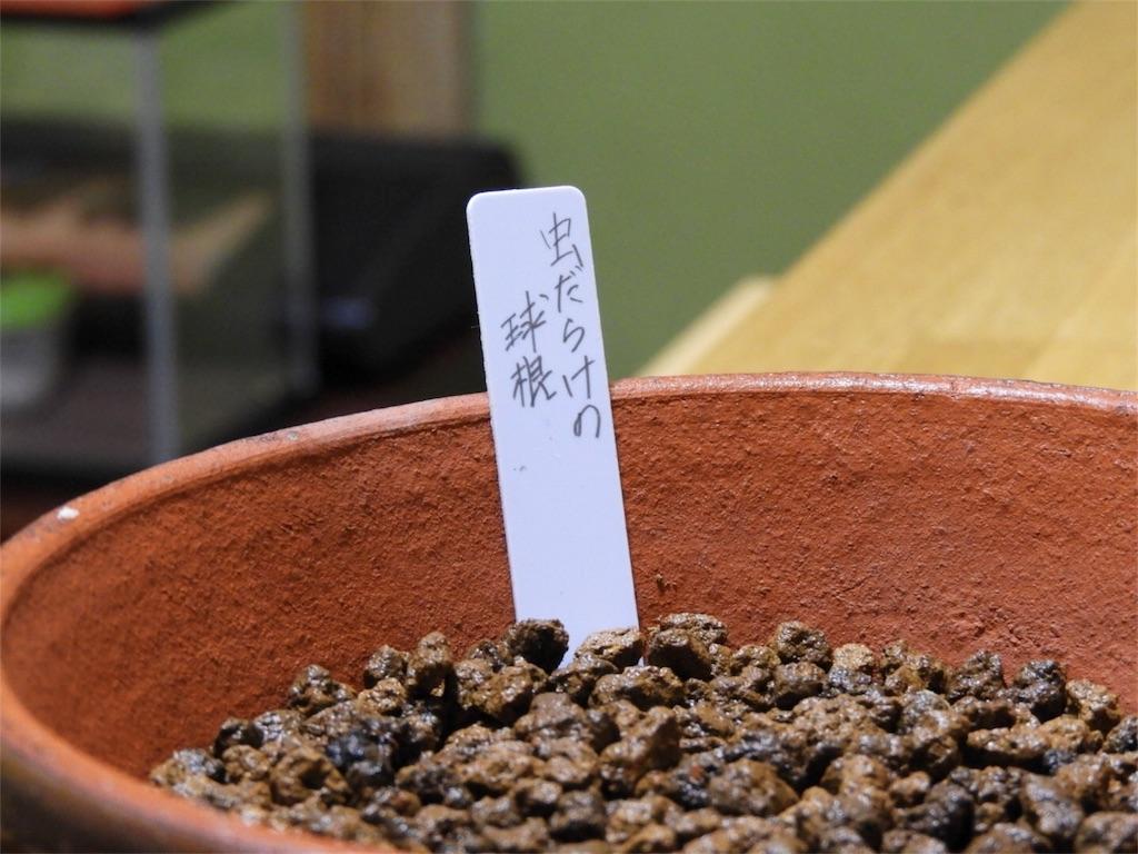 f:id:kamome-plants:20180607232051j:image
