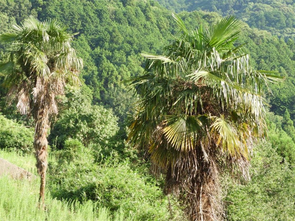 f:id:kamome-plants:20180712231652j:image