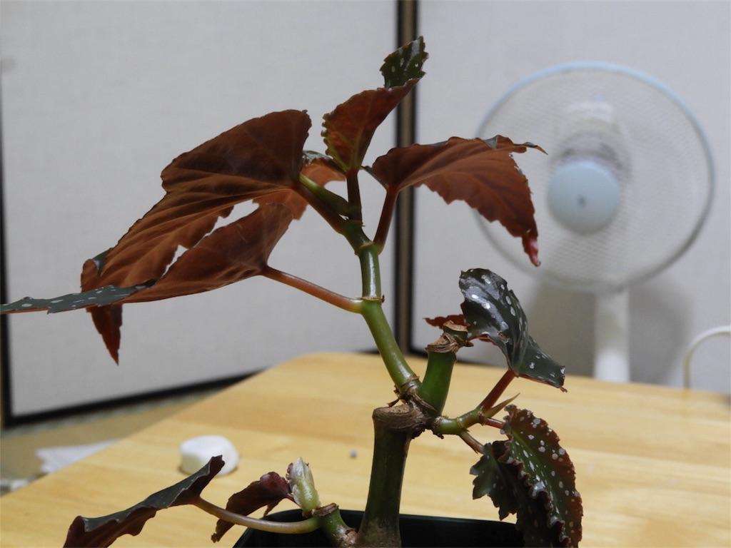 f:id:kamome-plants:20180715021801j:image