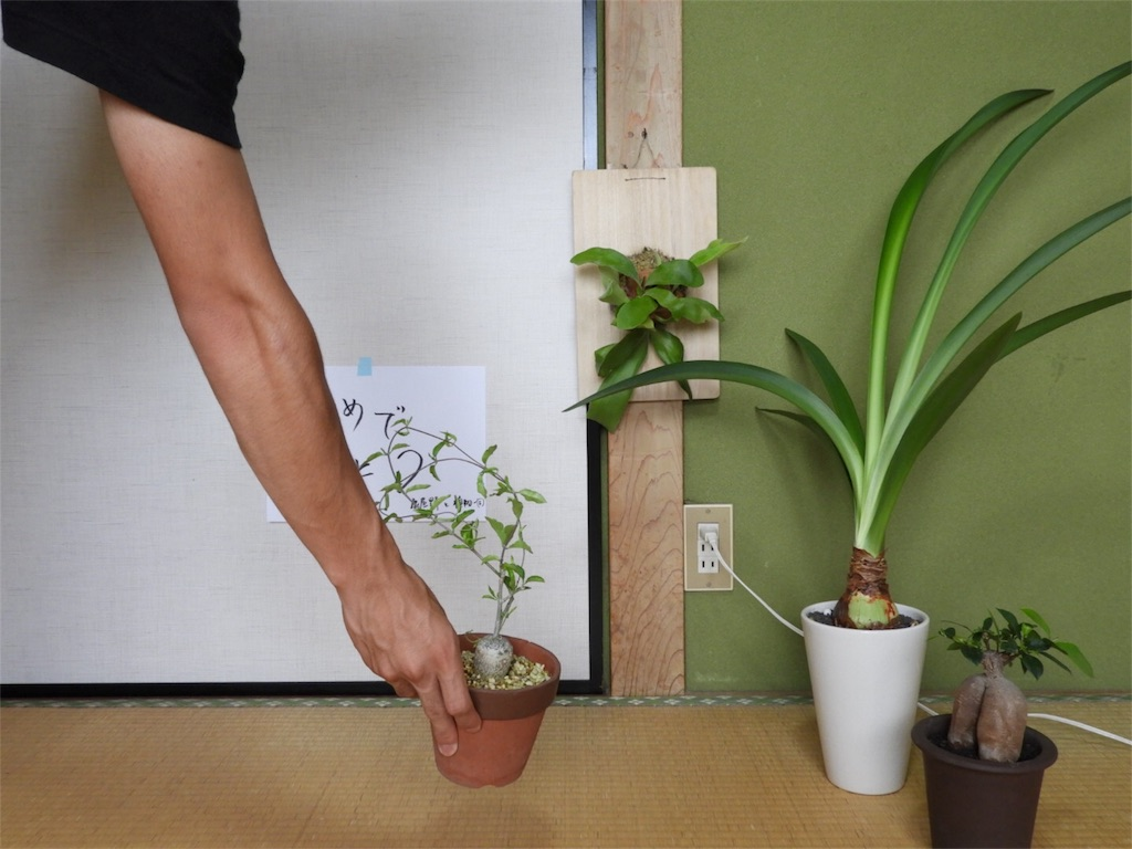 f:id:kamome-plants:20180810233419j:image