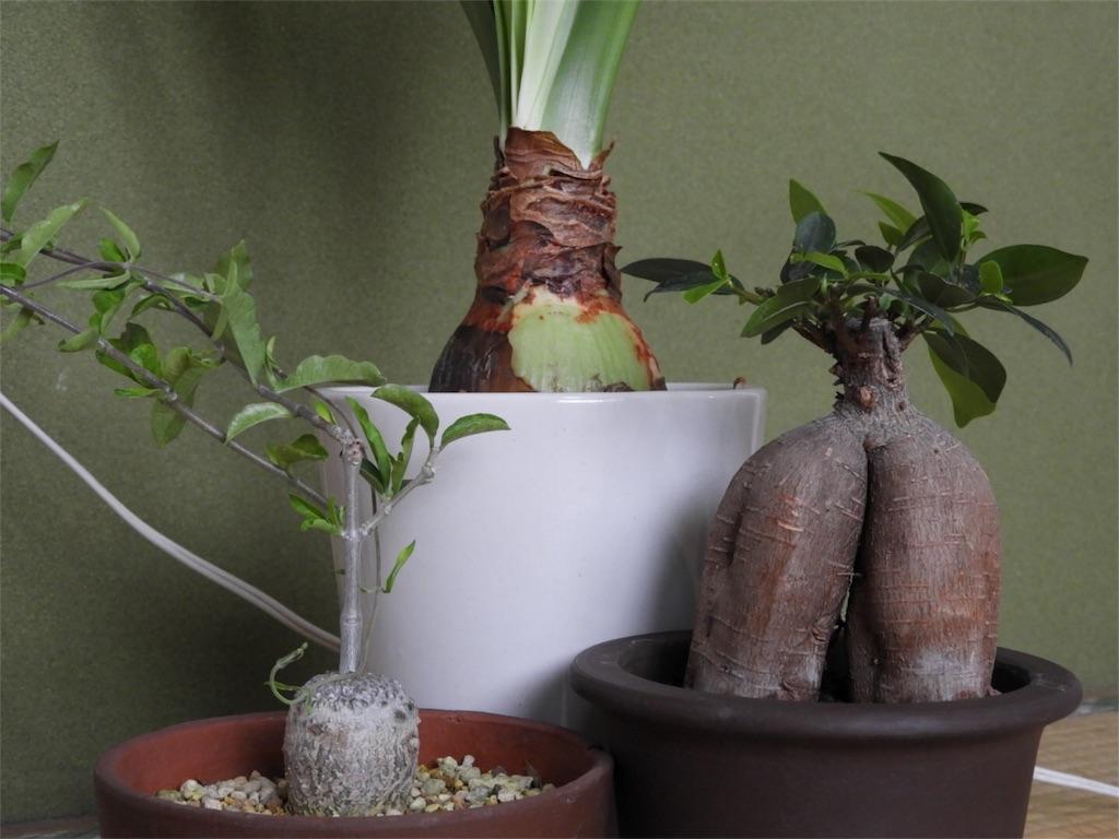 f:id:kamome-plants:20180810234035j:image