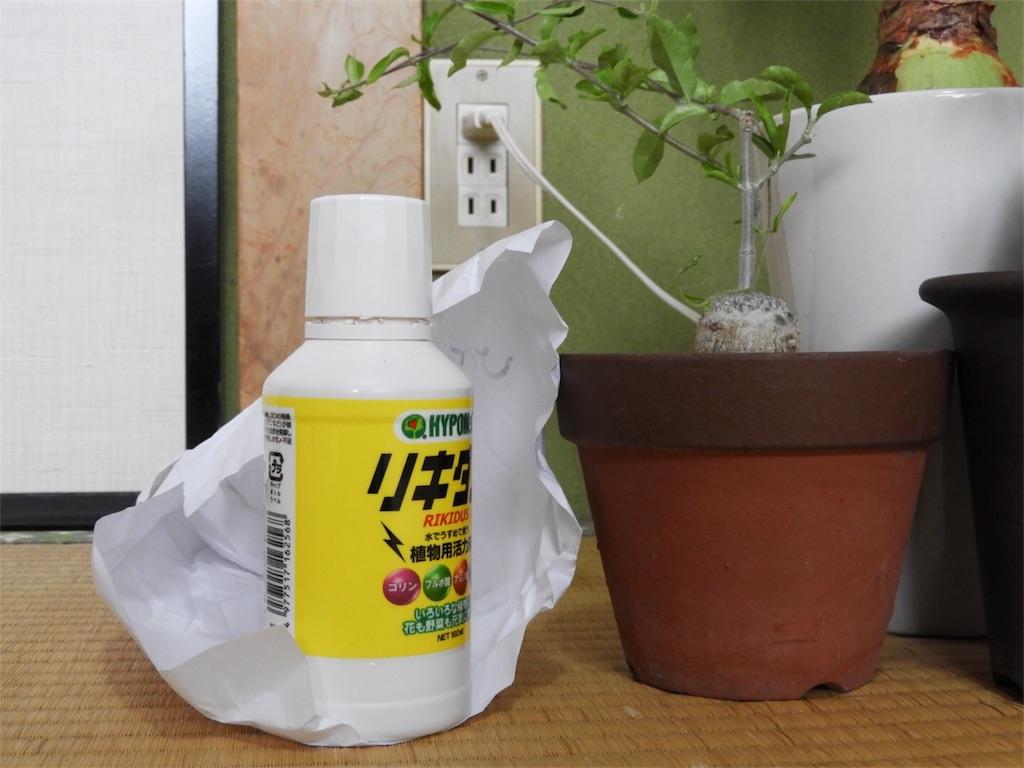 f:id:kamome-plants:20180810234406j:image