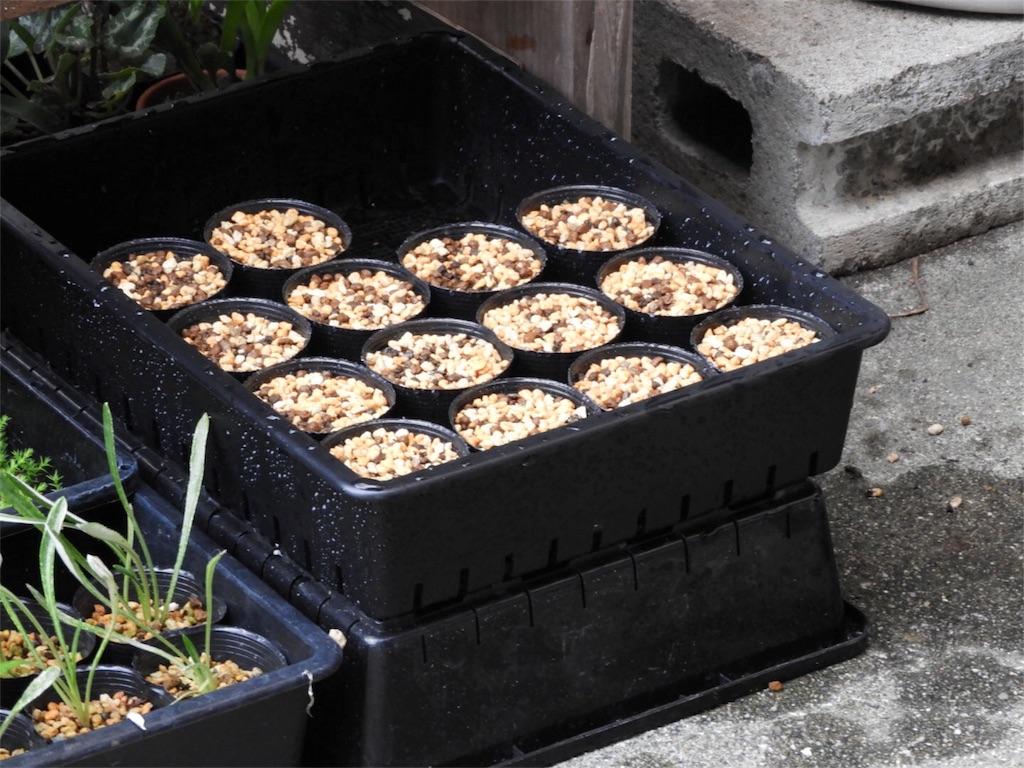 f:id:kamome-plants:20180912224658j:image