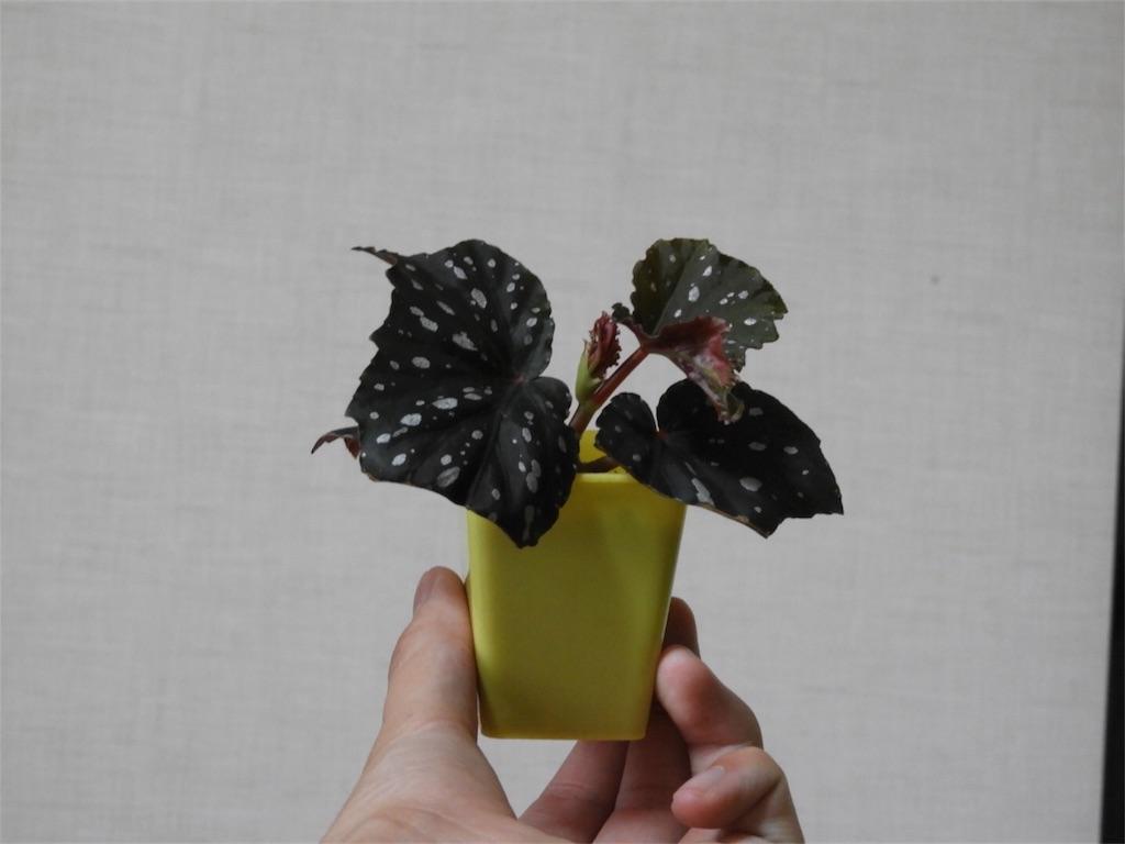f:id:kamome-plants:20180919214218j:image
