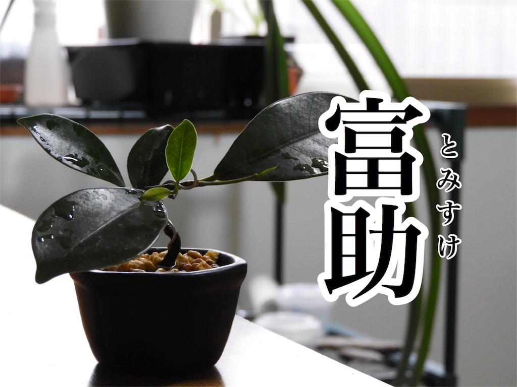 f:id:kamome-plants:20181015165603j:image