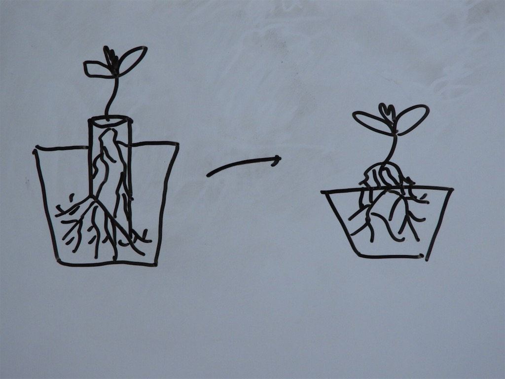 f:id:kamome-plants:20190329042045j:image