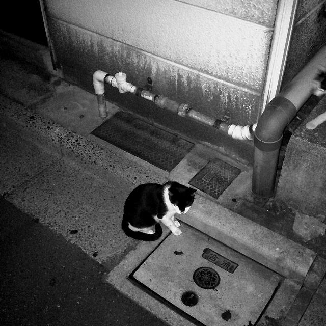 f:id:kamome-tokyo:20100920034148j:image:w600