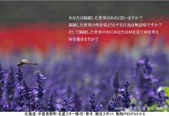 f:id:kamomenotoushi:20161105121607j:plain