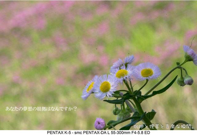 f:id:kamomenotoushi:20170419230620j:plain
