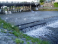 京都新聞写真コンテスト 初夏の鴨川にシャボン玉