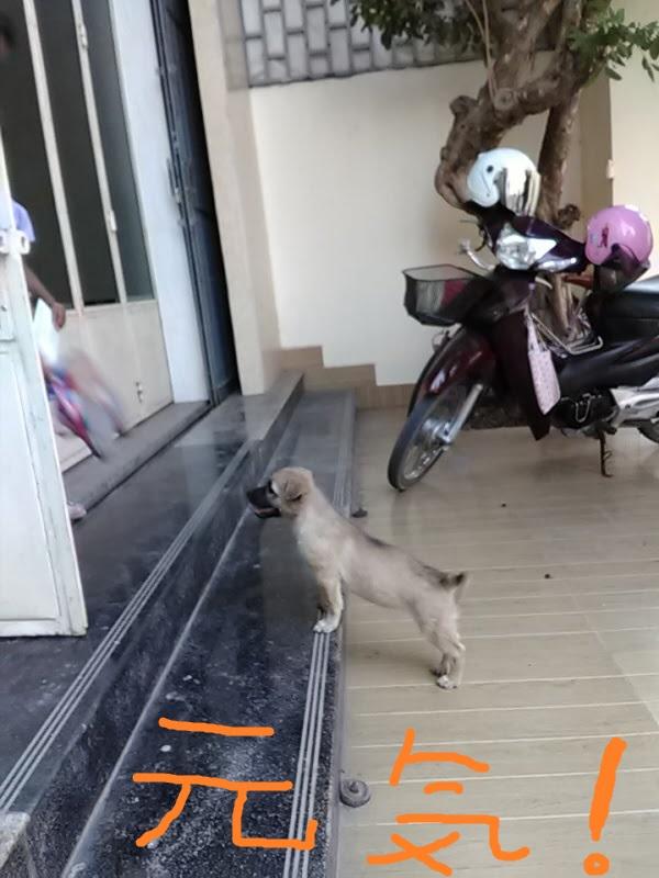 f:id:kampongcham2:20180309001147j:plain