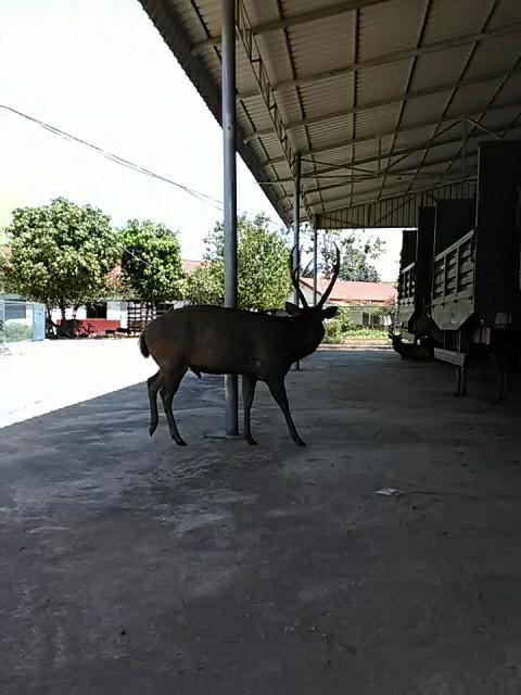 f:id:kampongcham2:20180310172021j:image