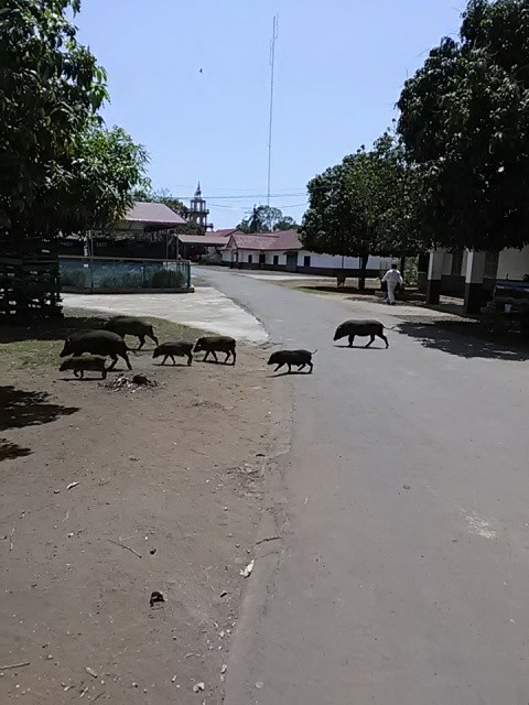f:id:kampongcham2:20180310172311j:image
