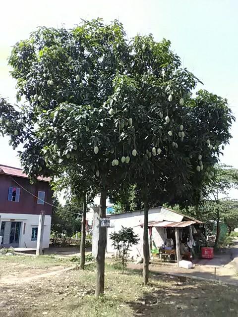f:id:kampongcham2:20180319091424j:image