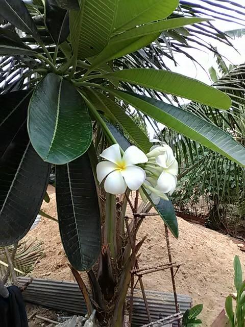 f:id:kampongcham2:20180404183310j:image