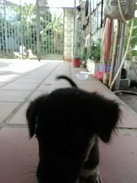 f:id:kampongcham2:20180428100637j:image