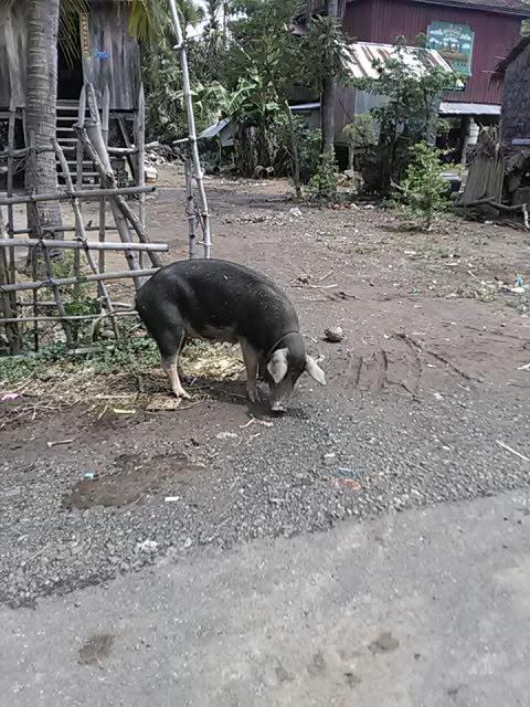 f:id:kampongcham2:20180909051822j:plain