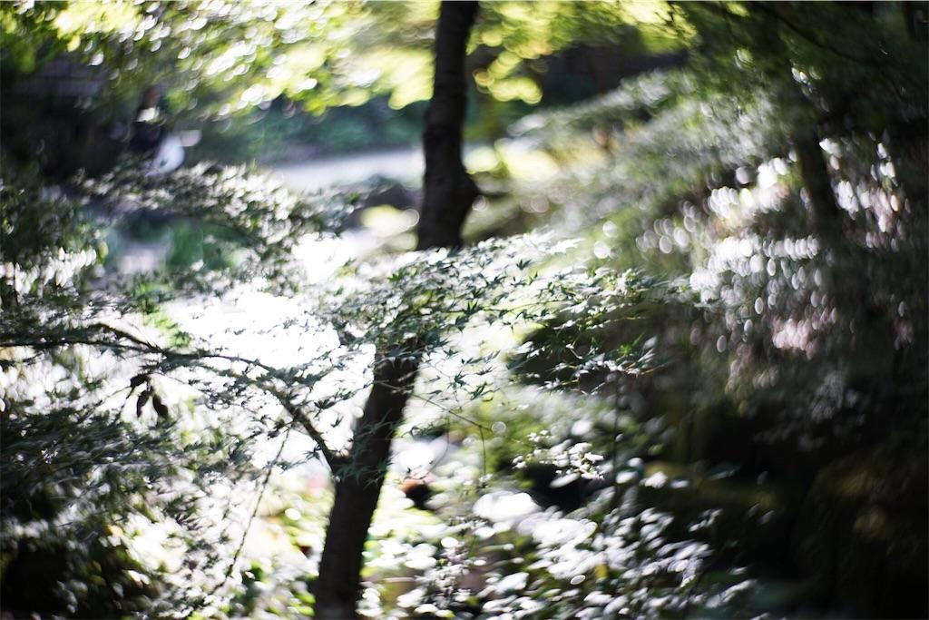 f:id:kana-contax:20161120181403j:image