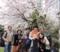 2011年4月10日、例会が始まる前、満開の桜の下で