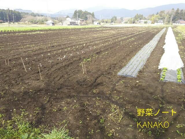 f:id:kana-note:20170505182122j:image