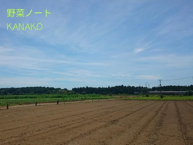 f:id:kana-note:20170506142201j:image
