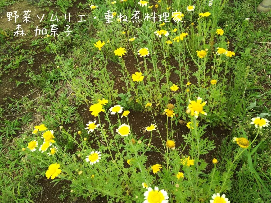 f:id:kana-note:20170630090118j:plain