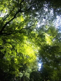 f:id:kana_session:20121004125343j:image:right