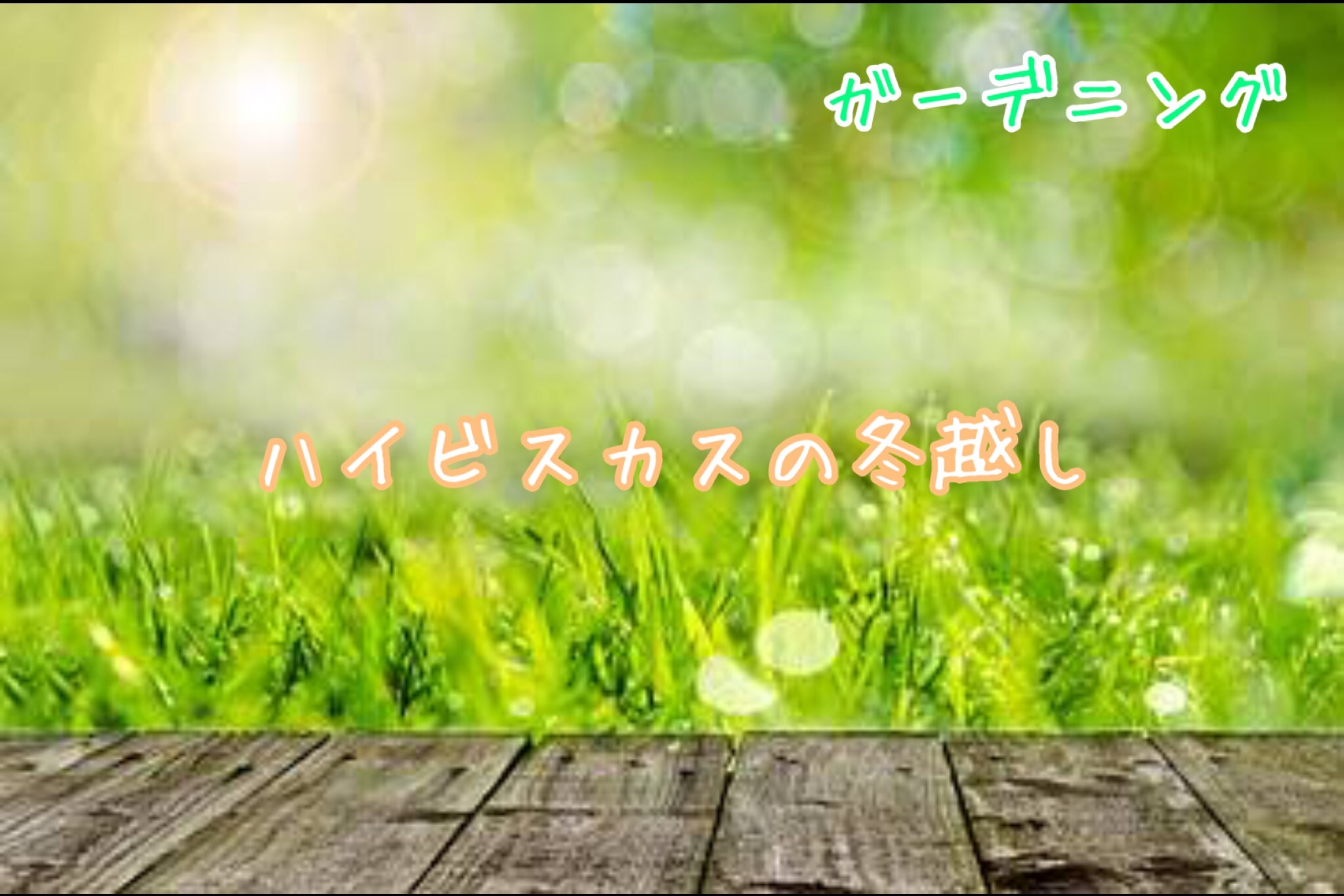 f:id:kanaemama:20201215130412j:image