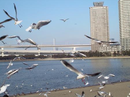 f:id:kanagawadaisei:20041226222334:image:w150