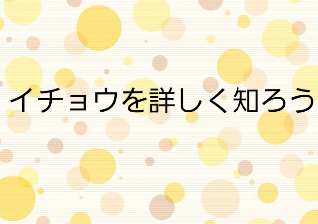 f:id:kanamemochi:20190517092924j:image