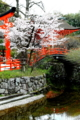 京都新聞写真コンテスト下賀茂神社の桜