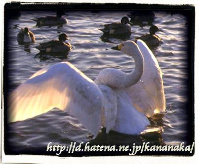 f:id:kananaka:20100120010951j:image