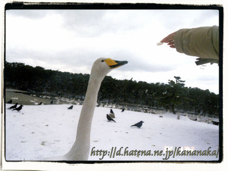 f:id:kananaka:20100120010952j:image