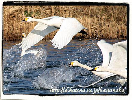 f:id:kananaka:20100120010954j:image