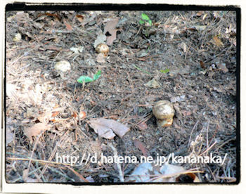 f:id:kananaka:20101017210044j:image