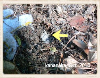 f:id:kananaka:20101017210045j:image