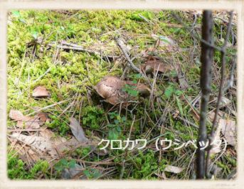 f:id:kananaka:20101017210047j:image