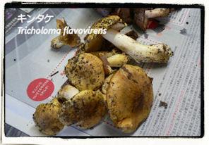 f:id:kananaka:20101017210102j:image