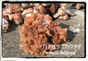 f:id:kananaka:20101017210103j:image