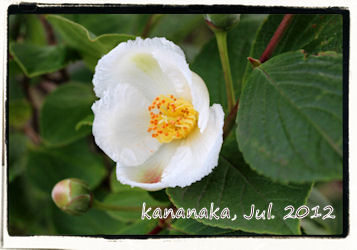f:id:kananaka:20120712153834j:image
