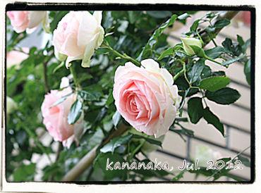 f:id:kananaka:20120712153835j:image