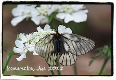 f:id:kananaka:20120712154226j:image