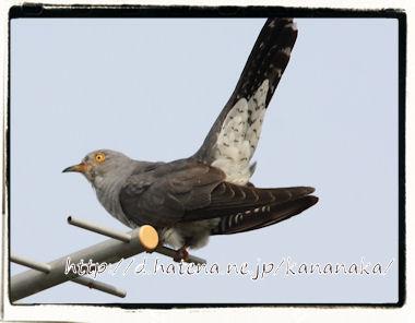 f:id:kananaka:20120712154227j:image