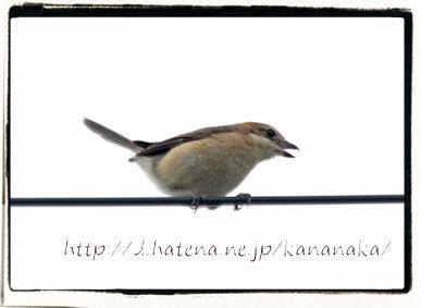 f:id:kananaka:20120712154228j:image