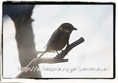 f:id:kananaka:20120712164117j:image